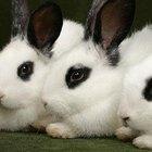 Como cuidar de coelhos recém-nascidos