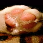 Cat Toenail Infections