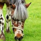 Equine Crohn's Diseases