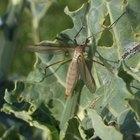 Repelente de insectos orgánico casero con ajo y vinagre
