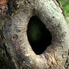 Como consertar buracos em troncos de árvores