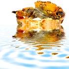 ¿Cuánto gana el capitán de un barco pesquero de cangrejos?
