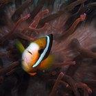 ¿Cómo afecta el agua al comportamiento del pez?