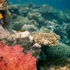 Presentes de bodas de coral