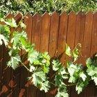Ideas to Hide Garden Fences