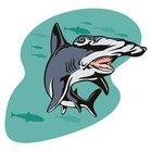 El ciclo de vida del tiburón martillo