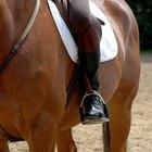 Tratamento para queimaduras de corda em cavalos