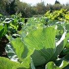 ¿Qué vegetales crecen en lugares con sombra parcial?