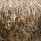 Como clarear uma peruca sintética