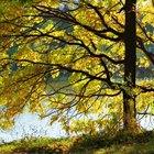 Cómo explicar las cuatro estaciones primavera, verano, invierno y otoño a un niño