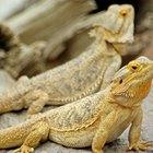 Qué tan importantes son los reptiles para los humanos