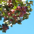 How to Protect Fruit Trees From Birds