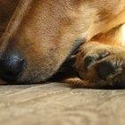 ¿Qué causa que las almohadillas de las patas se descamen?