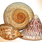 Ideas para decorar con conchas de mar