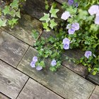 The Types of Floorboards