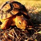 How to Make a Tortoise Costume