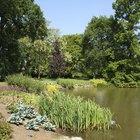Pond building grants