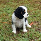 How to Train a Puppy With Obedience Commands