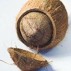 ¿Cuáles son los beneficios del aceite de coco para el pelo?