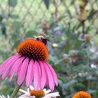 Lista de las flores polinizadas por las abejas