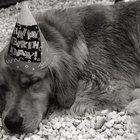 Ideas para una fiesta de cumpleaños canina