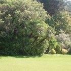 El cloro en el agua del jardín, ¿puede lastimar las plantas y los árboles?