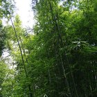 Growing Bamboo for Commercial Use
