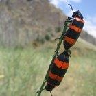 Cómo enseñar a pequeños alumnos sobre insectos y bichos