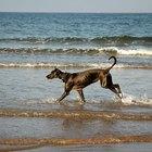 Lesiones y hemorragias en la cola de los perros