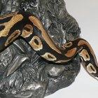 Cómo hacer un disfraz de serpiente pitón para niños