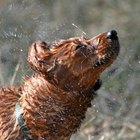 How to Get Rid of Skunk Smell in Dogs