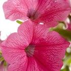 Flores que requieren sol pleno