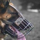 Cómo hacer un bozal de emergencia para perro