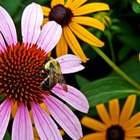 How to Get Rid of Bees In a Garden