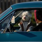 Motion Sickness Remedies for Dogs