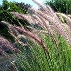 Tall grass types
