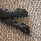 Doenças nas patas de cães