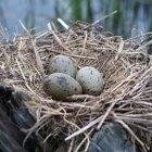 British Bird Eggs Identification
