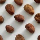 ¿Para qué se usan los granos de cacao?