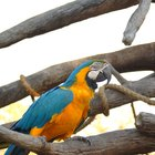 Ideal aviary size for macaws