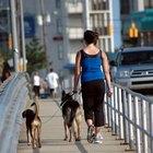 Las mejores razas de perros para caminar