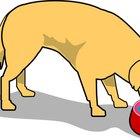 Dieta hipoalergênica caseira para cães