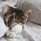 Cómo quitar los malos hábitos a un gato