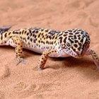 El hábitat del lagarto lagartija