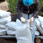 Cómo plantar brotes de palmera sagú