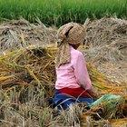 How does fair trade help farmers?