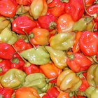 Cómo cultivar chile habanero
