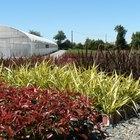 Tipos de suelo de plantas de vivero
