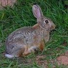 Rabbit Control & Poison
