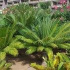 Do ferns need acidic soil?